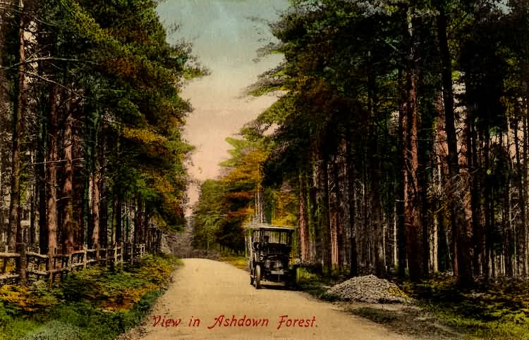 View in the Ashdown Forest - c 1910