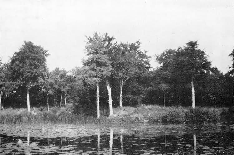 The Lily Pond in old Rectory grounds - c 1929