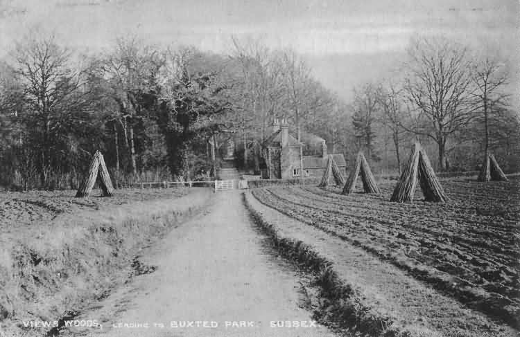 Views Wood, leading to Buxted Park - 1906